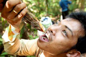 Dok bpcb. Minum air dari akar pohon