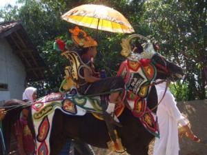kuda renggong 1