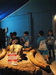 Pengunjung dapat menyentuh fosil