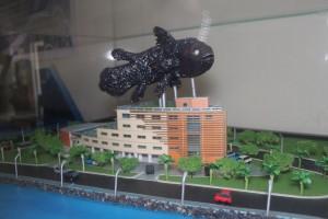 Museum Coelacanth 2015
