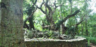 Pedewa di Gunung Pujut