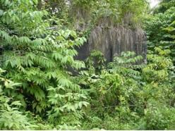You are currently viewing Gardu listrik Peningki Lama, Tarakan, Kalimantan Utara