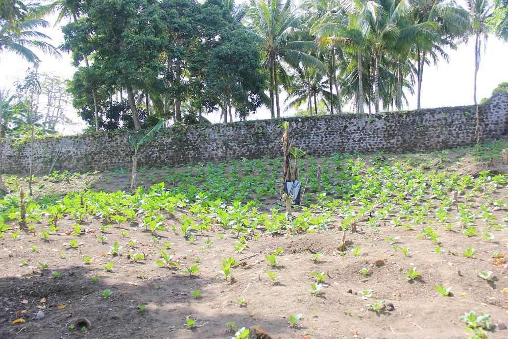 Benteng Mauritius Pulau Makian