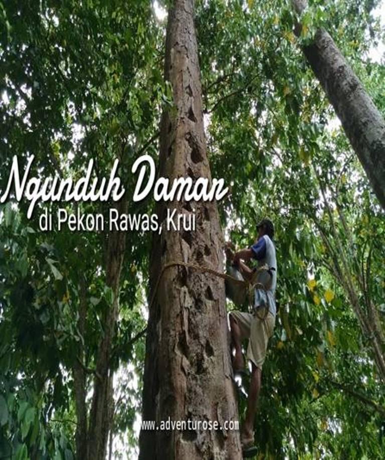 Read more about the article Ngundukh Damakh Ditetapkan sebagai Warisan Budaya Takbenda Indonesia Tahun 2019