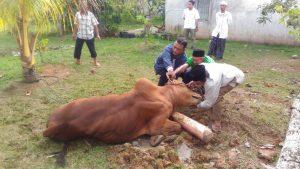 Read more about the article Indahnya Bersedekah di Hari Raya Idul Adha