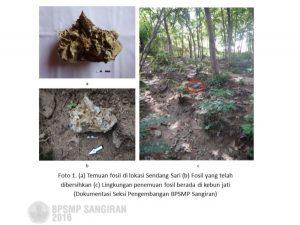 Read more about the article FOSIL BALANUS DI SITUS BANJAREJO