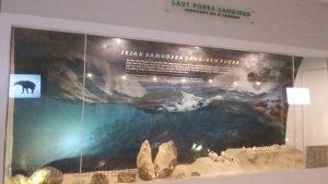 Read more about the article Jejak Laut di Situs Sangiran