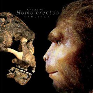 Read more about the article Katalog Homo erectus Sangiran (Sangiran 18a)