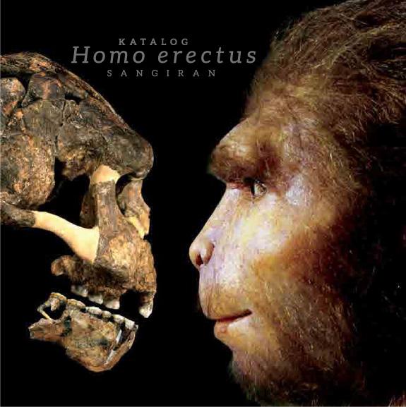 You are currently viewing Katalog Homo erectus Sangiran (Sangiran 2)