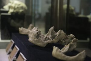 Read more about the article Pameran Prehistoric Heritage di Jakarta