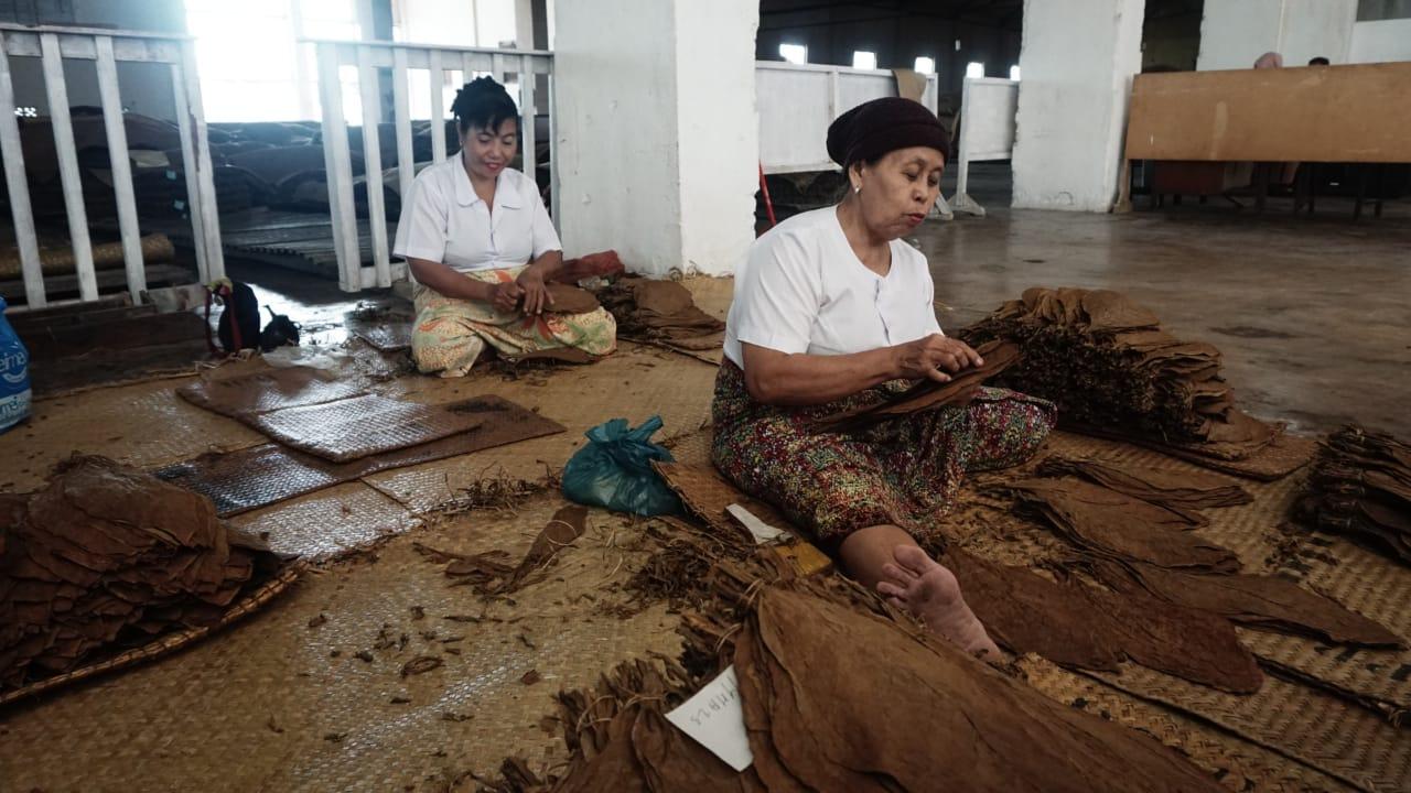 You are currently viewing Aroma Kejayaan Tembakau Deli, Tak Seharum Dulu